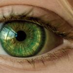 Zastosowanie produktów pszczelich i ziół w chorobach oczu,